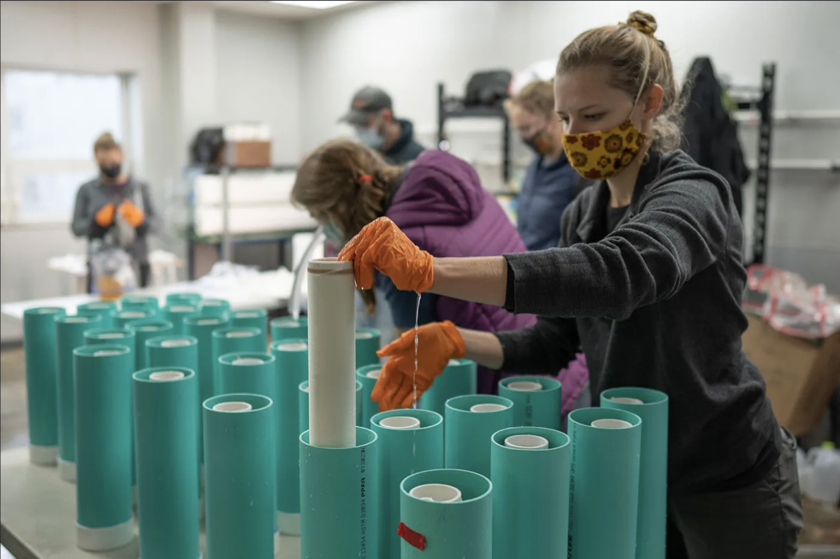 Tesia Bobrycki growing kelp seed for Native Conservancy test sites with partner Alutiiq Pride Marine Institute in Seward, Alaska. (Photo by Ayse Gursoz)
