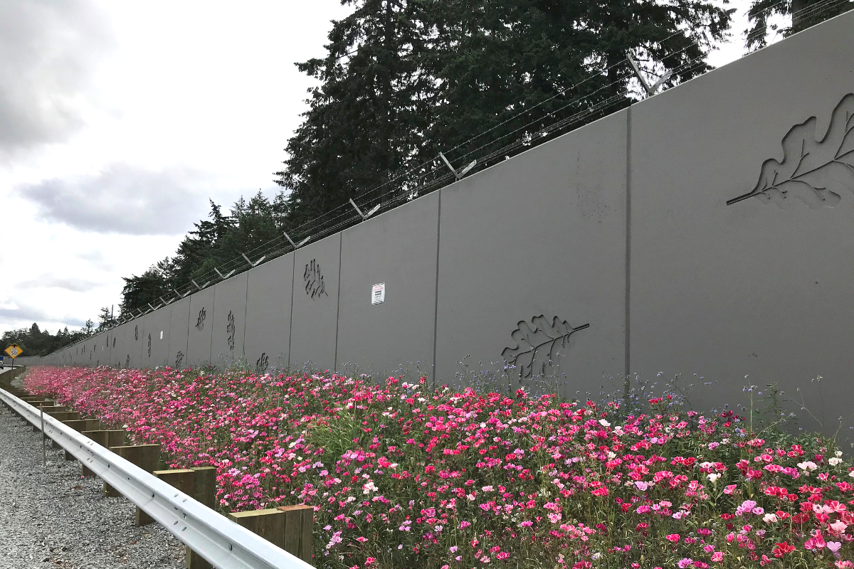 A newly widened stretch of Interstate 5 in Washington has been planted with Wildflower Pollinator Mix. The blooms will change as the seasons change. (Photo CC-licensed by the Washington Department of Transportation)